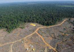 "A coalition of green groups in Indonesia has criticised a moratorium on deforestation as ""weak"""