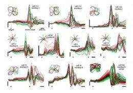 A different drummer: Neural rhythms drive physical movement