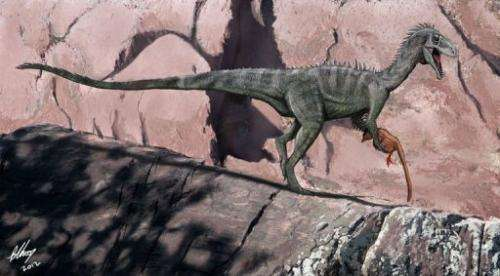 A new discovery suggests Australia had the same large predators such as tyrannosaurs as the rest of the world