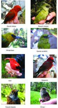 An introduced bird competitor tips the balance against Hawaiian species