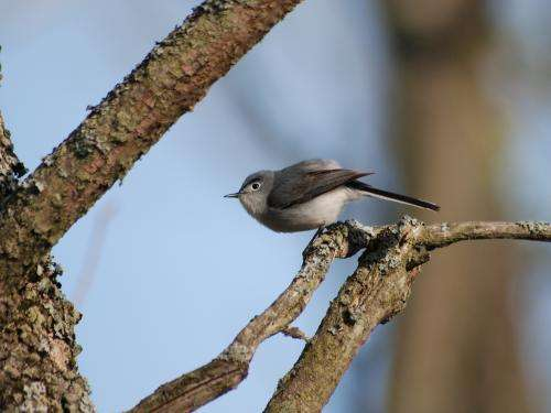 Bird rest stops to be tracked by NASA rain radar