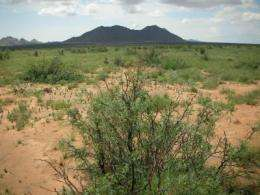 Disappearing grasslands: Scientists to study dramatic environmental change