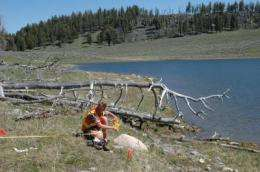 Elk bones tell stories of life, death, and habitat use at Yellowstone National Park