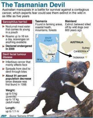 Graphic on Australia's Tasmanian Devils