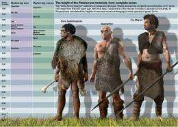 Homo heidelbergensis was only slightly taller than the Neanderthal