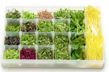 Microgreens: Tiny, but powerful