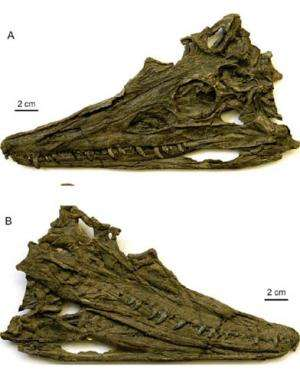 New Archosaur Found from the Marine Triassic of Southwestern China