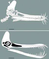 New toothed flying reptile found from the early creataceous of western Liaoning, China