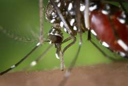 Precautions against West Nile virus recommended