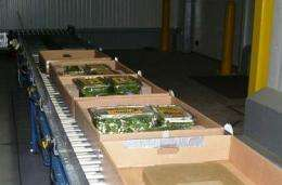 Study shows electron-beam irradiation reduces virus-related health risk in lettuce, spinach