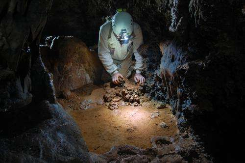 Three new arthropod species have been found in the Maestrazgo Caves in Teruel