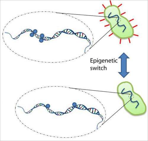 UCSB researchers' discovery of 'hopping' of bacterial enzyme gives insight into gene expression