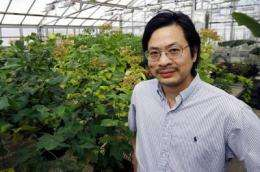 Researchers find mechanism that gives plants 'balance'