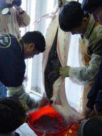 International regulation curbs illegal trade of caviar