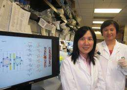 PolyU study sheds light on the diseasing-fighting process of