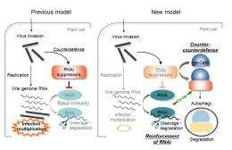 Researchers find tobacco protein enhances crop immune systems