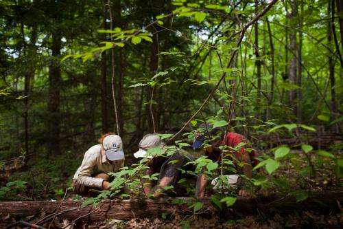 In Blown-Down Forests, a Story of Survival