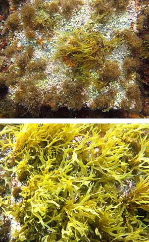 Ocean acidification and interspecies competition could transform ecosystems, research shows