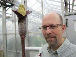 Our Amorphophallus is smaller: New plant species from Madagascar smells like roadkill
