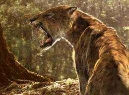 Prehistoric predators with supersized teeth had beefier arm bones