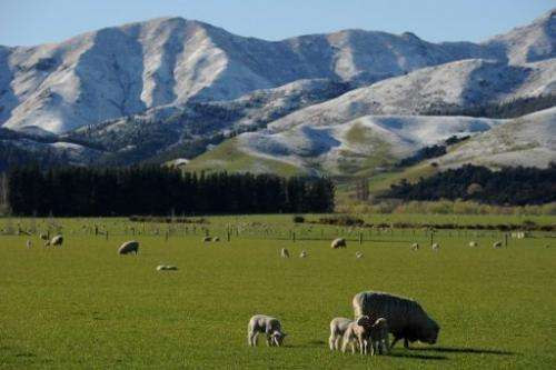 """Scientists measured the """"creeping earthquakes"""" when they investigated a section of the Alpine Fault in South Island"""