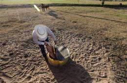 Seeking hardier breeds for drought, climate change