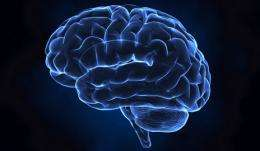 Study explores how brain disruption may foster schizophrenia