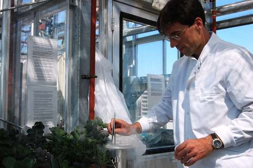 International project aims to develop water-efficient biofuel crops