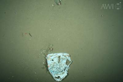 Biologists record increasing amounts of plastic litter in the Arctic deep sea