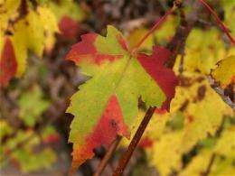 Mathematical model reveals commonality within the diversity of leaf decay