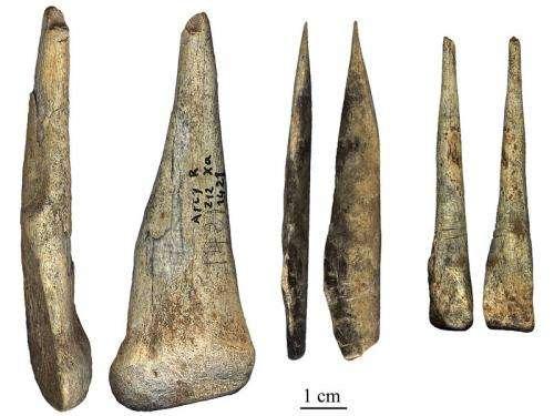 Neanderthals meet Homo sapiens