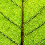 Scientists uncover a photosynthetic puzzle