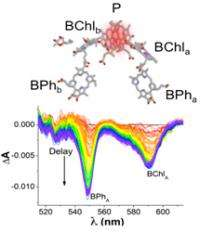 Shedding light on nature's nanoscale control of solar energy