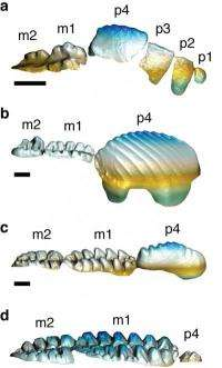 Some mammals used highly complex teeth to compete with dinosaurs