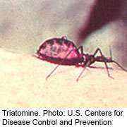 300,000 people in U.S. living with chagas disease:  report