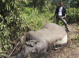 3 Sumatran elephants found poisoned in Indonesia