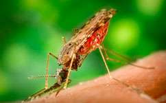 Climate-change effects on malaria risk