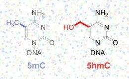 New technique reveals unseen information in DNA code