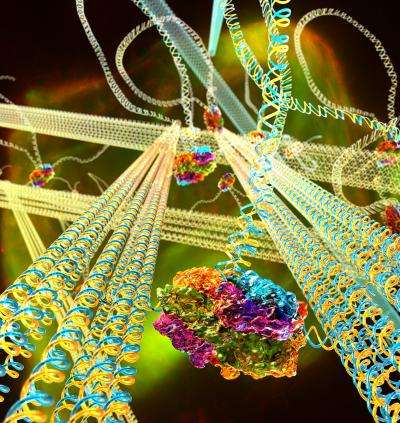 Scientists build 'mechanically active' DNA material