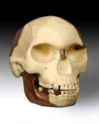 Scientists seek to solve mystery of Piltdown Man