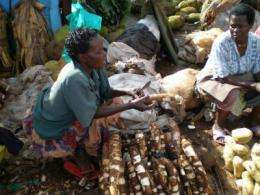 Researchers demonstrate control of devastating cassava virus in Africa