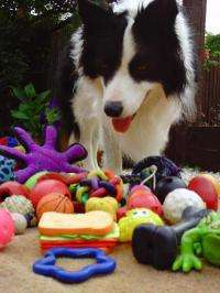 Call that a ball? Dogs learn to associate words with objects differently than humans do