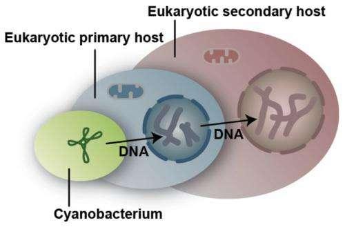 Tiny algae shed light on photosynthesis as a dynamic property