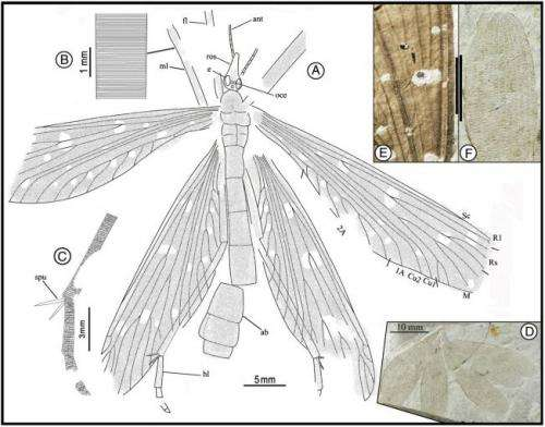 Jurassic insect that mimicked ginkgo leaves discovered