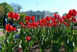 A couple (L) enjoys the sunny weather as tulips bloom at Lafayette Park in front of the White House