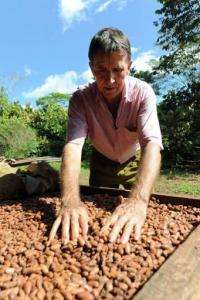 Ademir Venturim -- the president of a cooperative of 40 small producers  -- checks cocoa beans in Mecicilandia