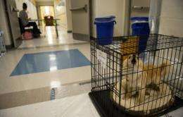 A dog barks as he sits in the hallway of Cape Henlopen High School which is being used as a Red Cross shelter