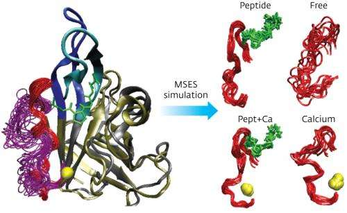 Advanced computer simulations reveal the conformational changes of an enzyme anchoring to its substrate