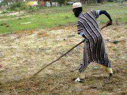 A farmer in northern Senegal rakes his field in 2004
