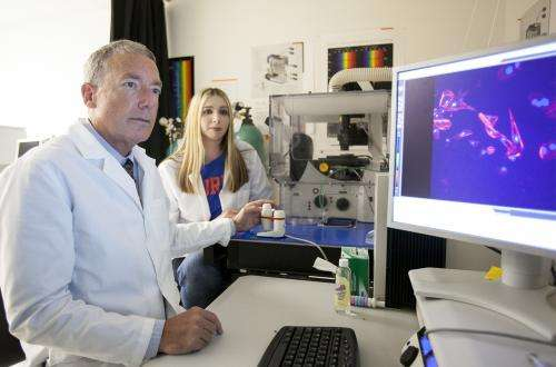 Analysis of bacterial genes may help ID cause of dog brain disease, researchers say